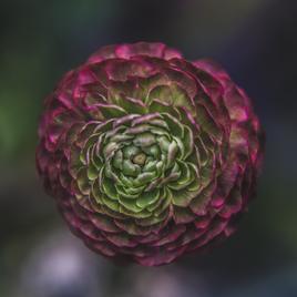 green-and-pink-flower_134x134_crop_center@2x.jpg