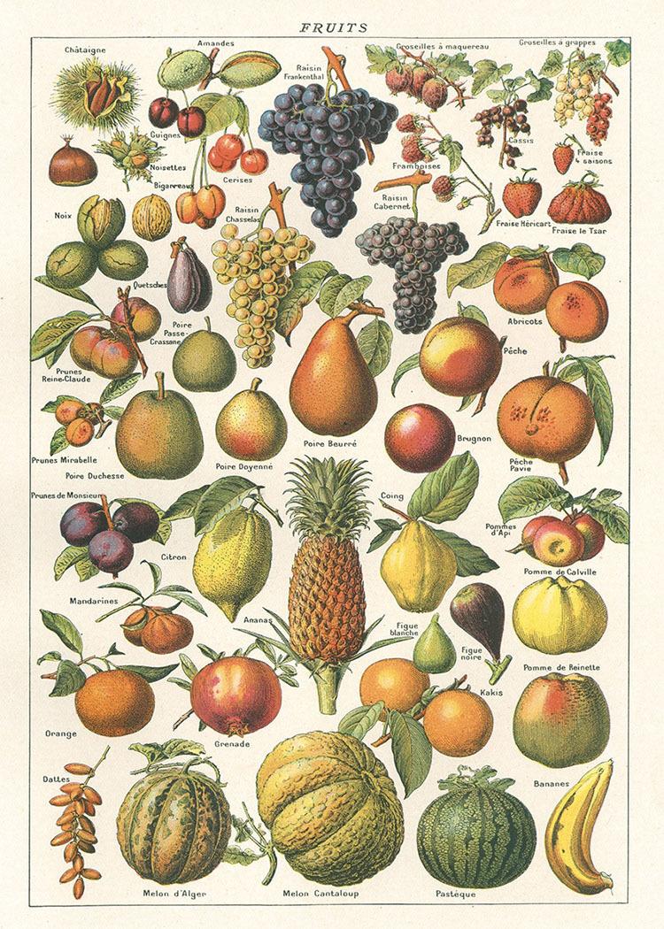 好多水果.jpg