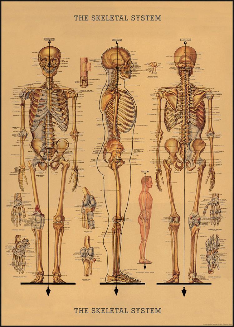 人體透視圖.jpg