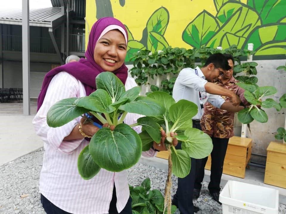 Urban Farm tech Aquaponics harvest.jpg