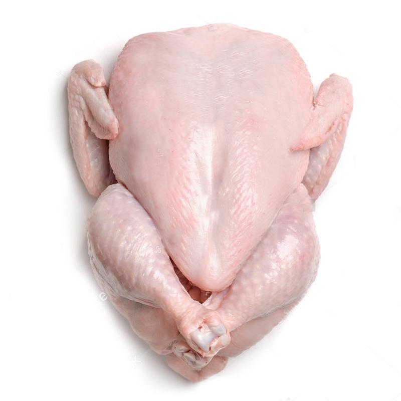 Ayam.jpg