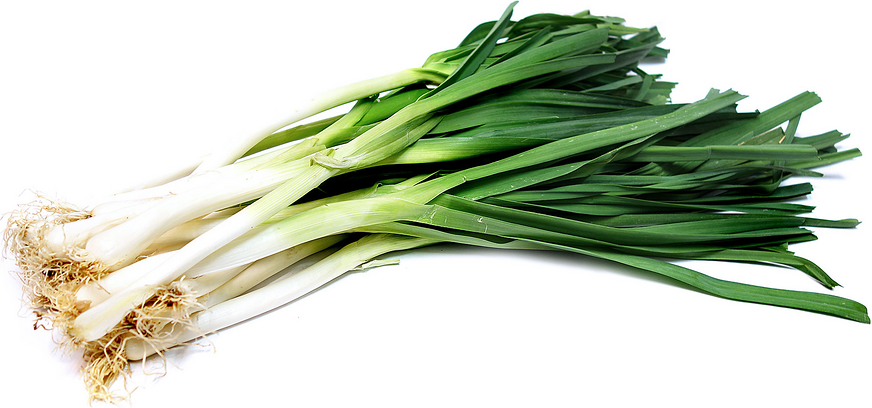 Bug's Paradise-Leek (220g) *(Outstation N/A; 外州送不到)