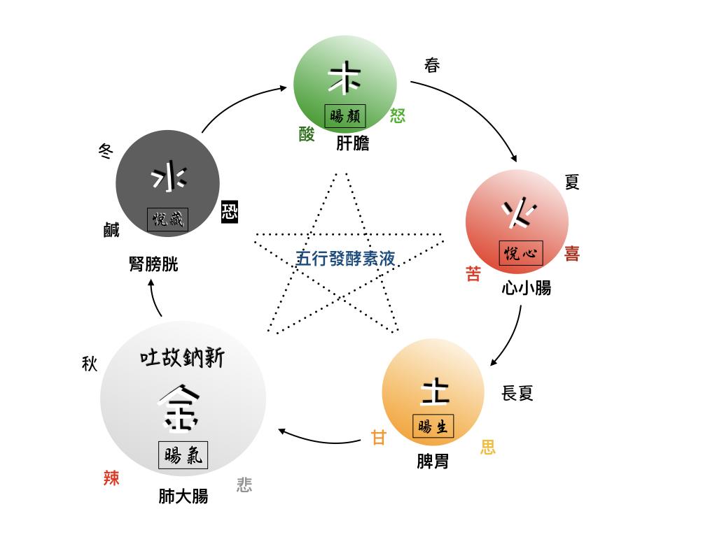 五行與悅暘發酵素液圖.004.jpeg