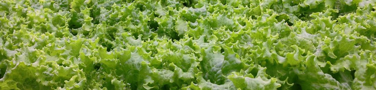 翠活安全蔬菜 | 安全-健康-無農藥