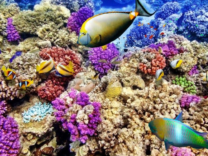 reef.jpeg