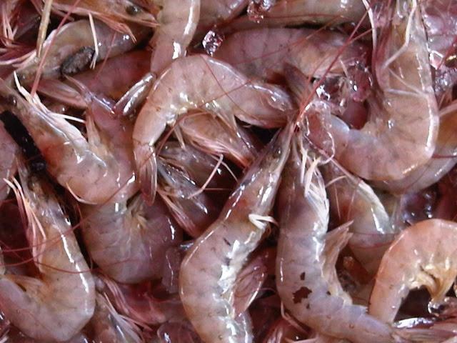 Shrimp / Udang Kertas 500g