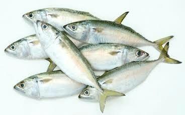 Indian Mackerel /  Termenung 1KG