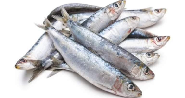 Sardine fish / Ikan sardin 1KG