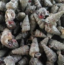 Belitung Snails / Siput Belintung 500g