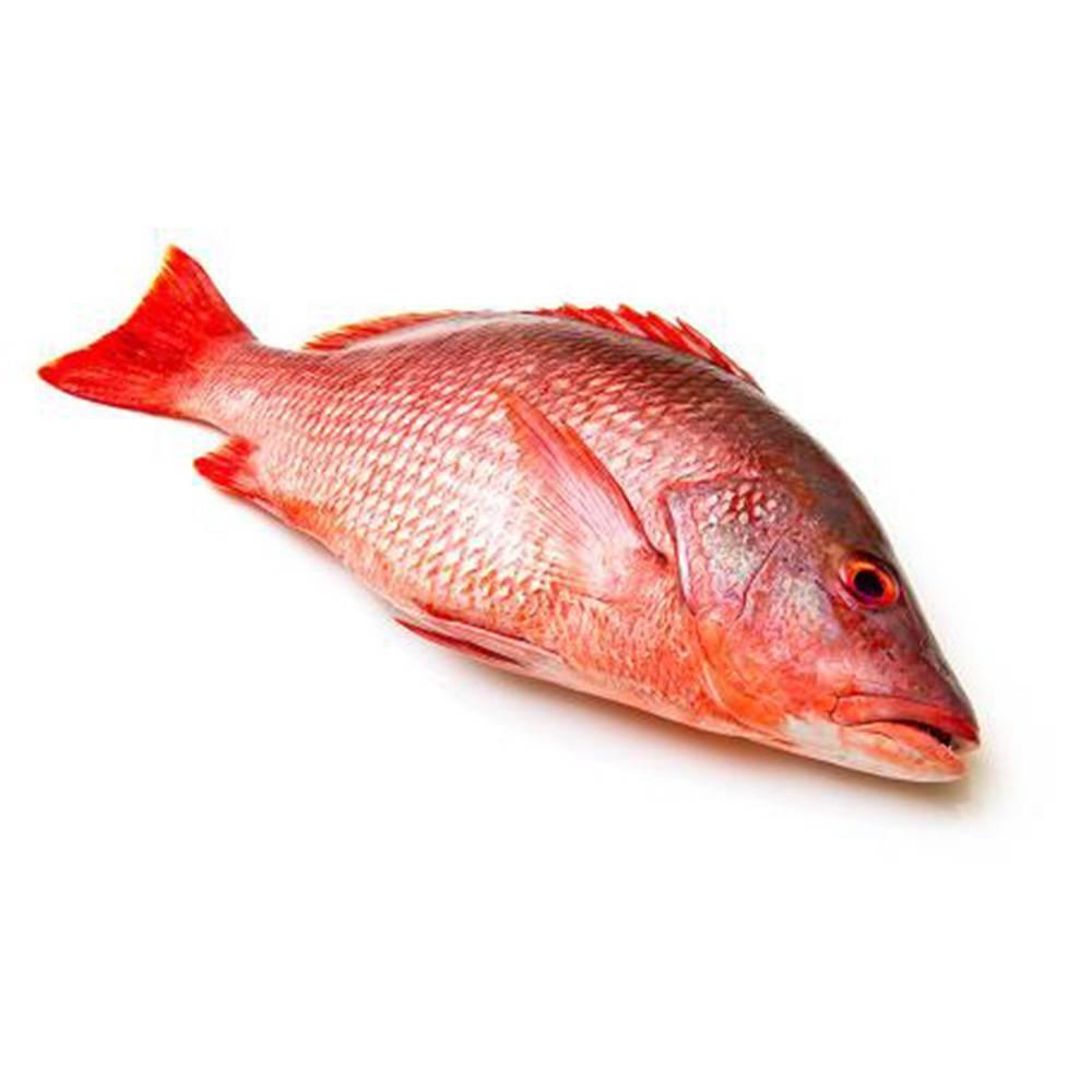 ikan-merah