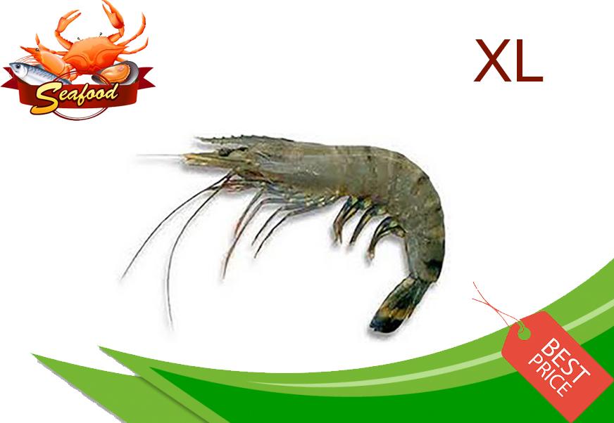 Tiger Prawn XL.jpg