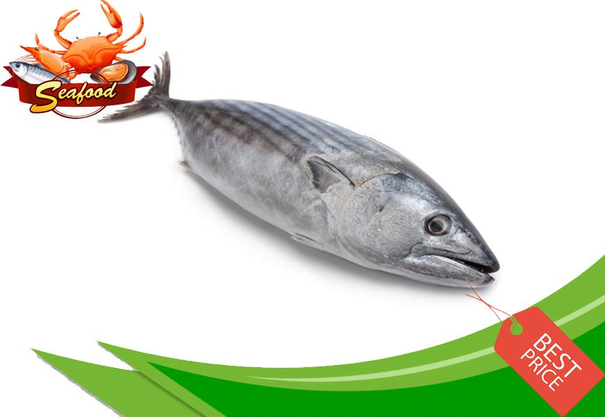 Ikan Tongkol Hitam.jpg