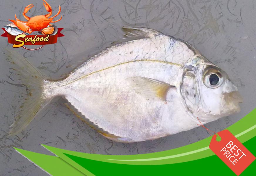 IkanKekek.jpg