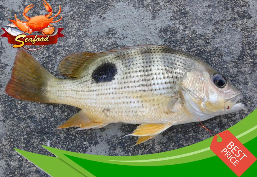 Ikan Tanda.jpg