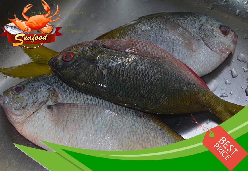 Ikan Tauhu.jpg