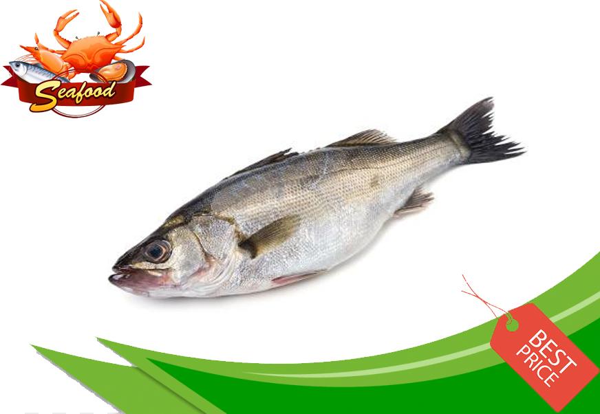 Ikan Susu.jpg