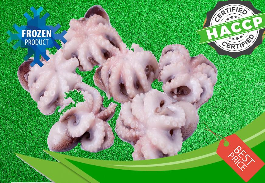 Baby Octopus.jpg