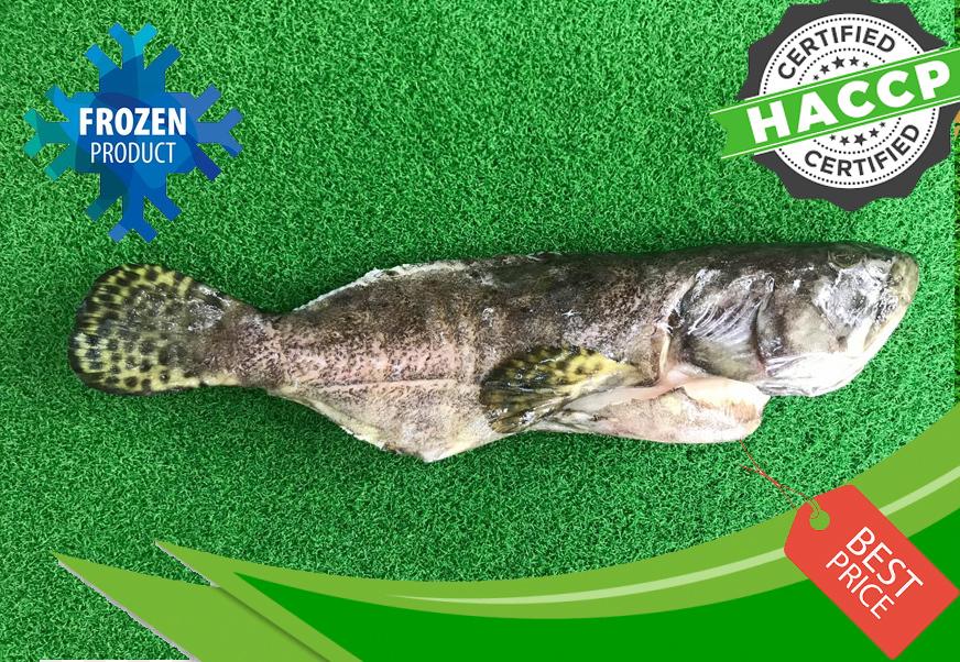 Sabah Tiger Garoupa (600-800G).jpg