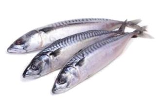 Ikan Sardin.png