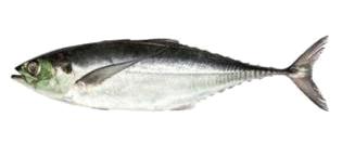Ikan Cencaru.png