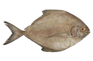 Ikan Bawal Hitam.png