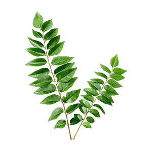 Daun Kari Curry Leaf.png