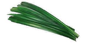 Daun Pandan, Pandan Leaf.png