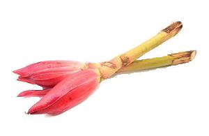 Bunga gantan.png