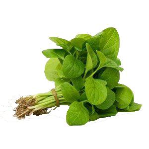 Baby Bayam  Baby Spinach.png