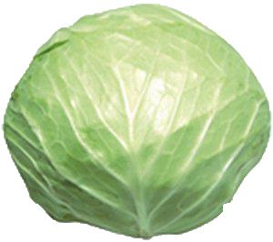 Round Cabbage Kubis Bulat.png