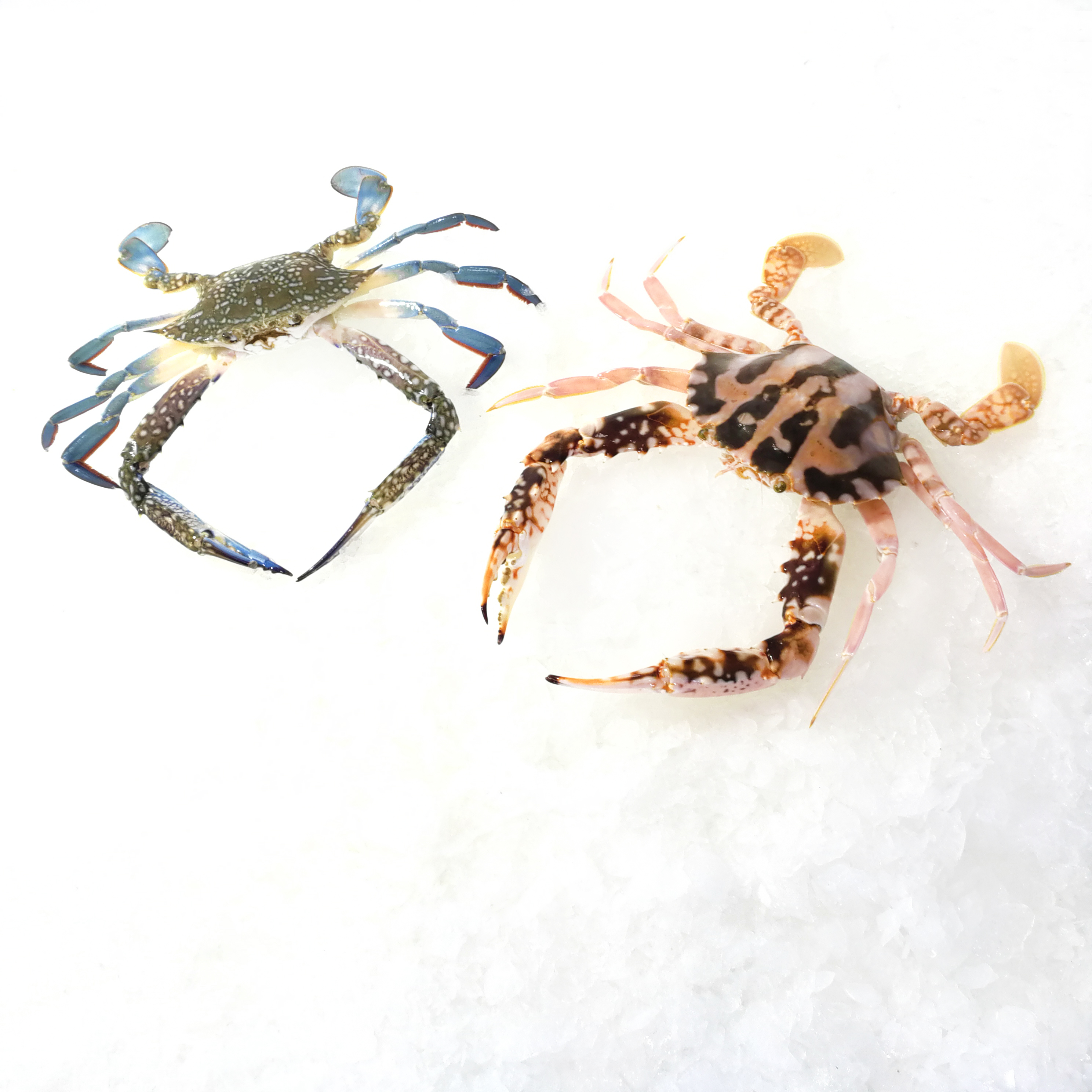 Crab Group.jpg