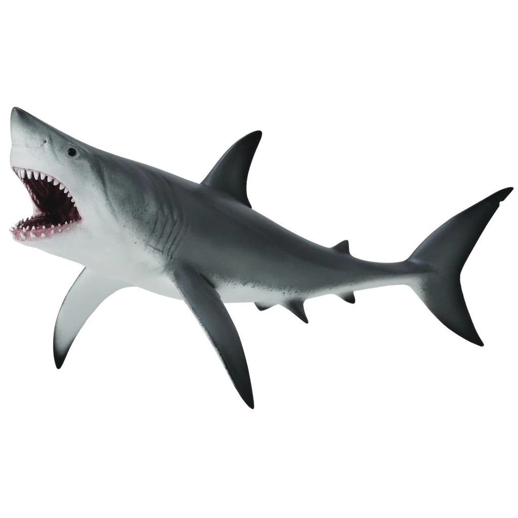 Great white shark open jaw.jpeg