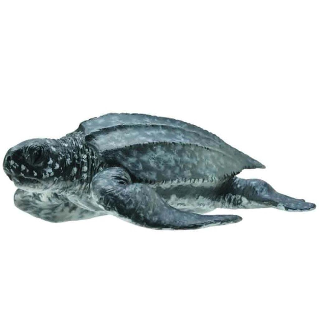 leatherback sea turtle.jpeg