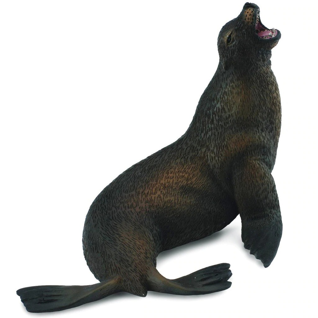 sea lion.jpeg