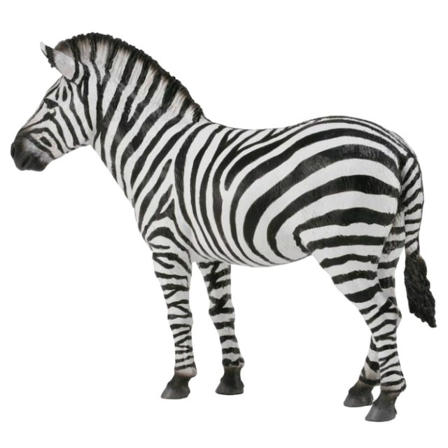 Common zebra.JPG