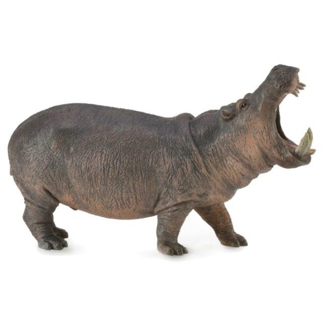 Hippopotamus .JPG