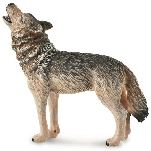 Timber wolf howling.JPG
