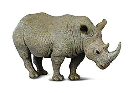 White rhinoceros -.jpg