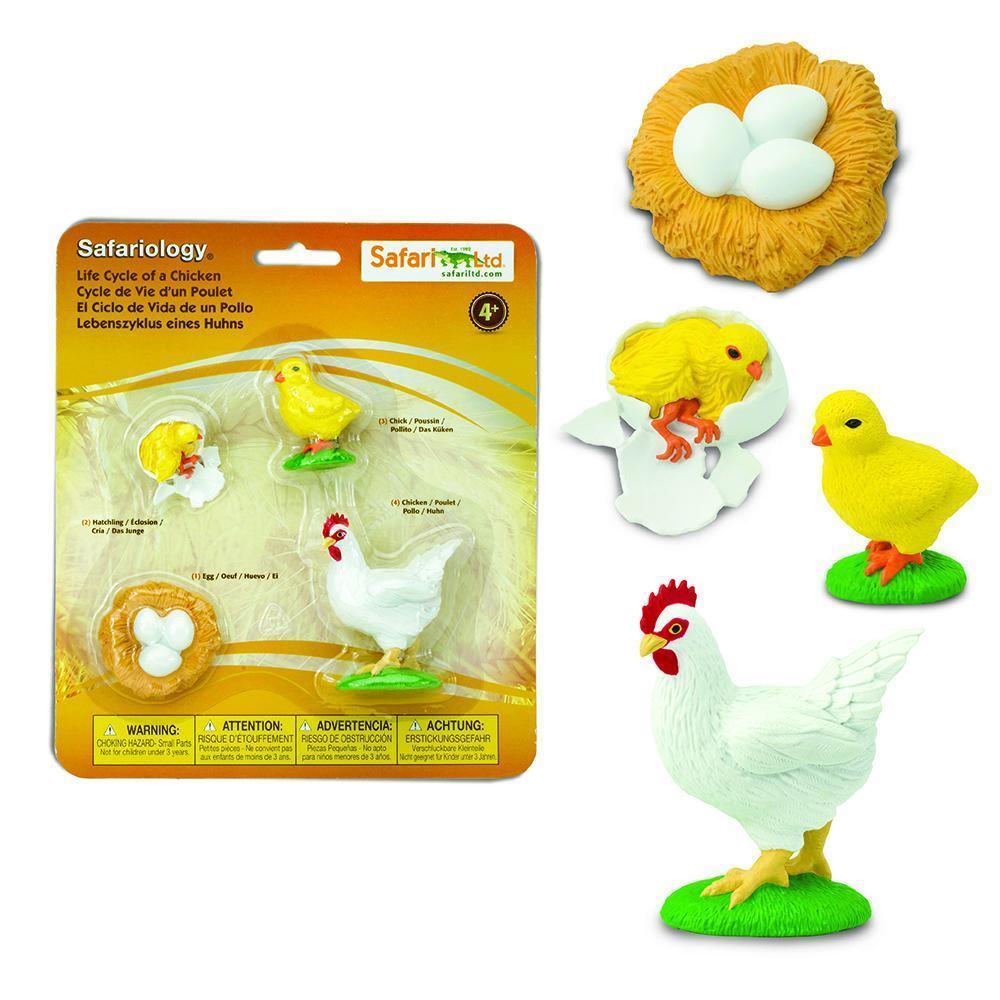 Life cycle - chicken 1.jpg