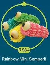 RS84.jpg