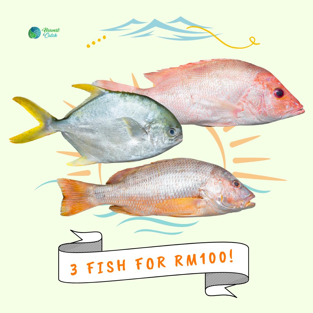 3 Fish Promo.png
