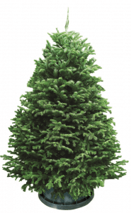 de0240f90e82 7 Best Christmas Tree Online Shops in Malaysia 2019 - ProductNation