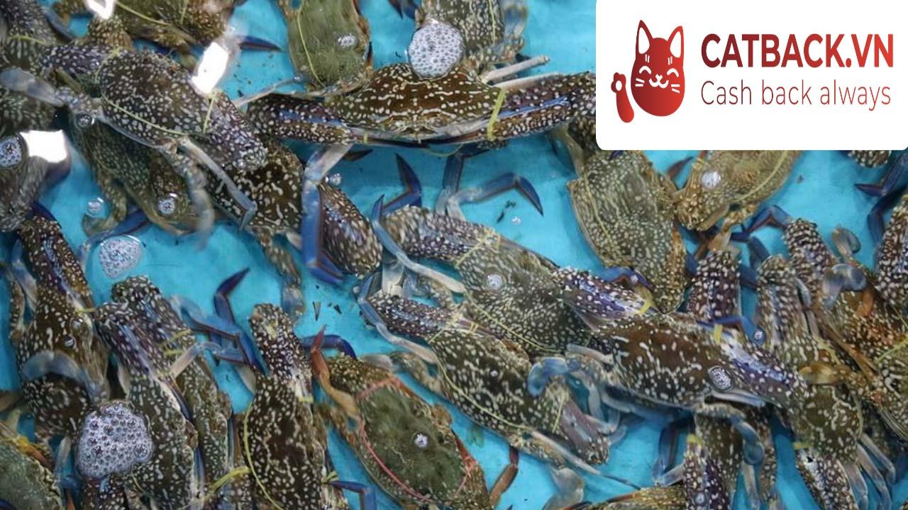Bảo quản hải sản còn tươi