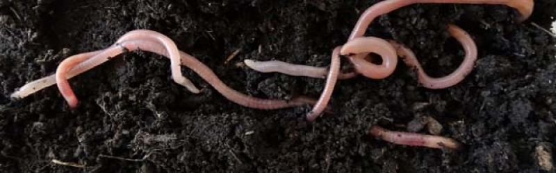 An experiment which saw two offspring of an earthworm in Mars' soil signifies  reproduction in alien mud.