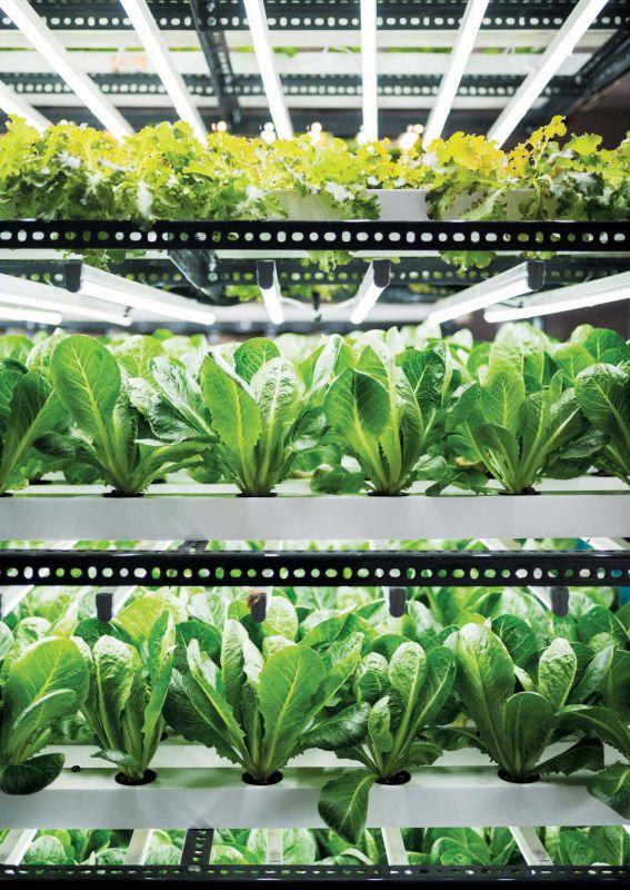 Herbivore Farm