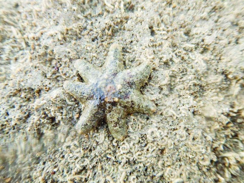 A starfish with seven arms