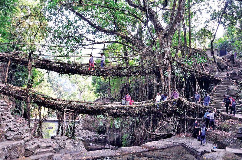 Double decker living root bridge, Meghalaya.