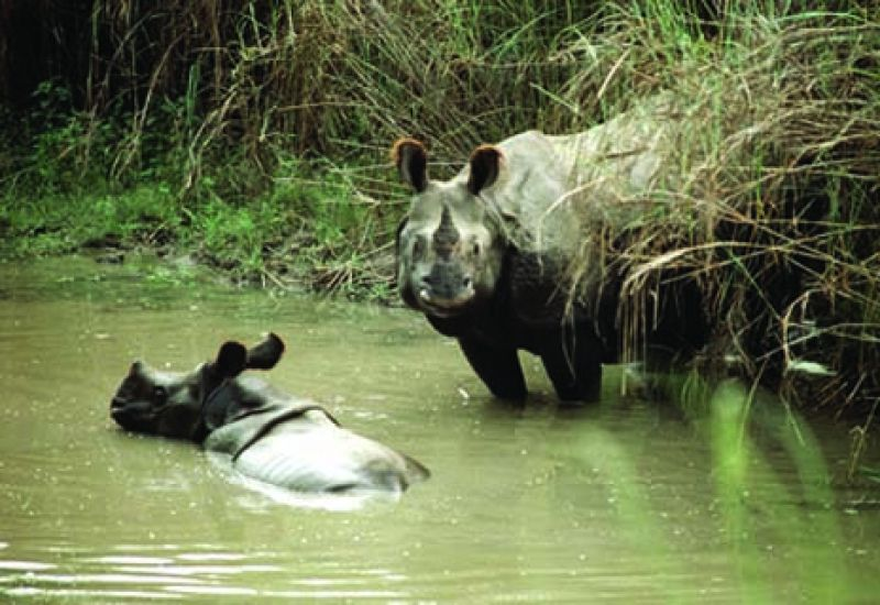 mother and baby rhinoceros in Tigertops Wildlife Sanctuary, Nepal (April 1, 1987)