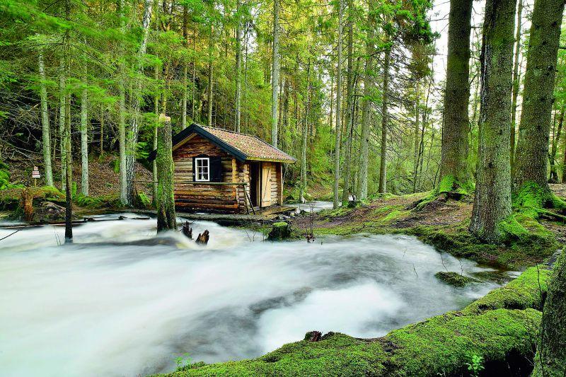 Forest of Stendammen, Svartedalen pic by Kjell Holmner, Goteborg & Co