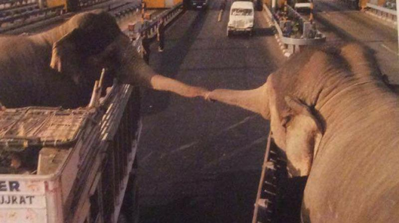 The two elephants were spotted on the highway before they separated. (Photo: Facebook)